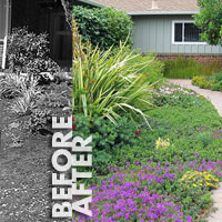 Before and After Gardens